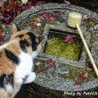 Cat's Eye View of Japanese Architecture vol. 5 – Perishable Landscape